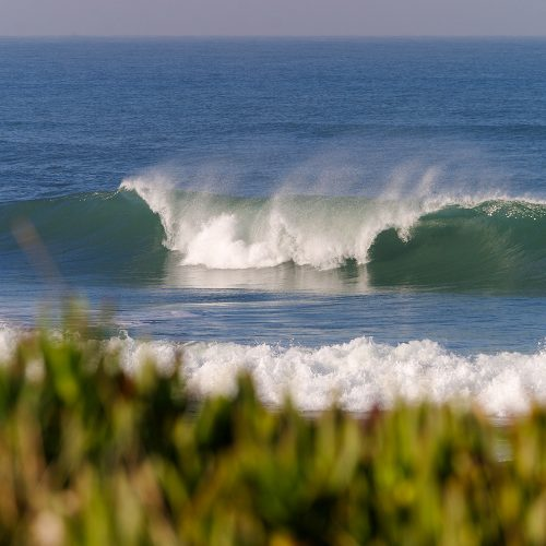 surf guide são torpes - champion surf guide (4)